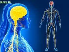 مغز احساس لمس شدن را فراتر از بدن حس میکند