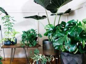 تهیه کود خانگی برای گیاهان آپارتمانی