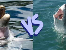 تفکر کوسهای ، تنفکر دلفینی ؛ شما جزو کدام دسته هستید؟