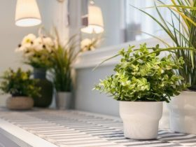 9 نکته برای مراقبت از گیاهان داخل منزل