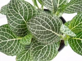 بهترین گیاهان برای پاکسازی هوا
